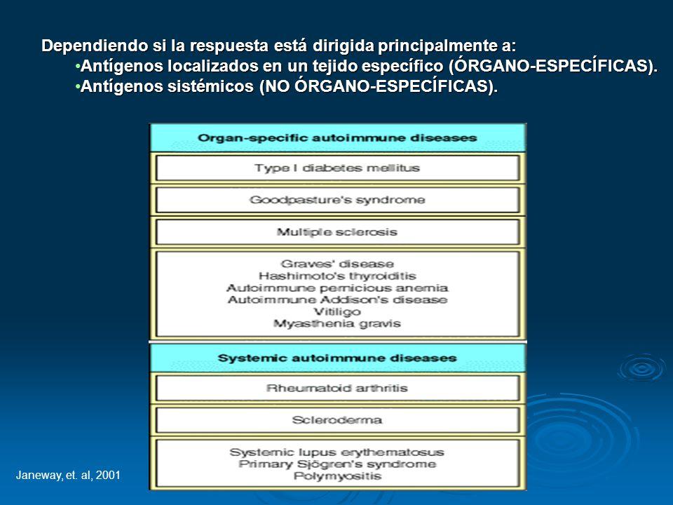 Dependiendo si la respuesta está dirigida principalmente a: Antígenos localizados en un tejido específico (ÓRGANO-ESPECÍFICAS).Antígenos localizados e