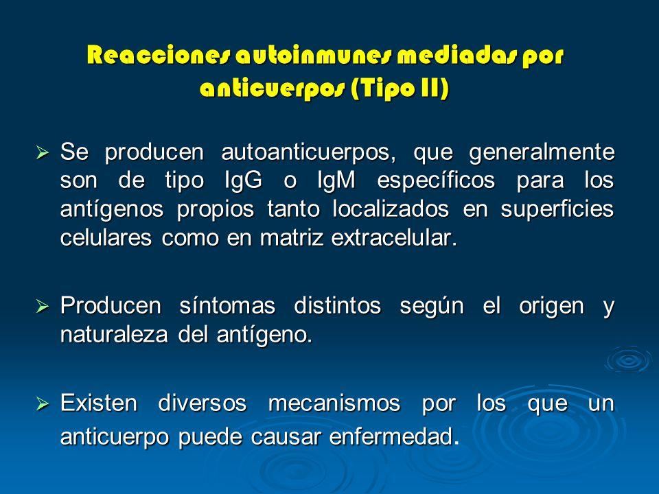 Reacciones autoinmunes mediadas por anticuerpos (Tipo II) Se producen autoanticuerpos, que generalmente son de tipo IgG o IgM específicos para los ant