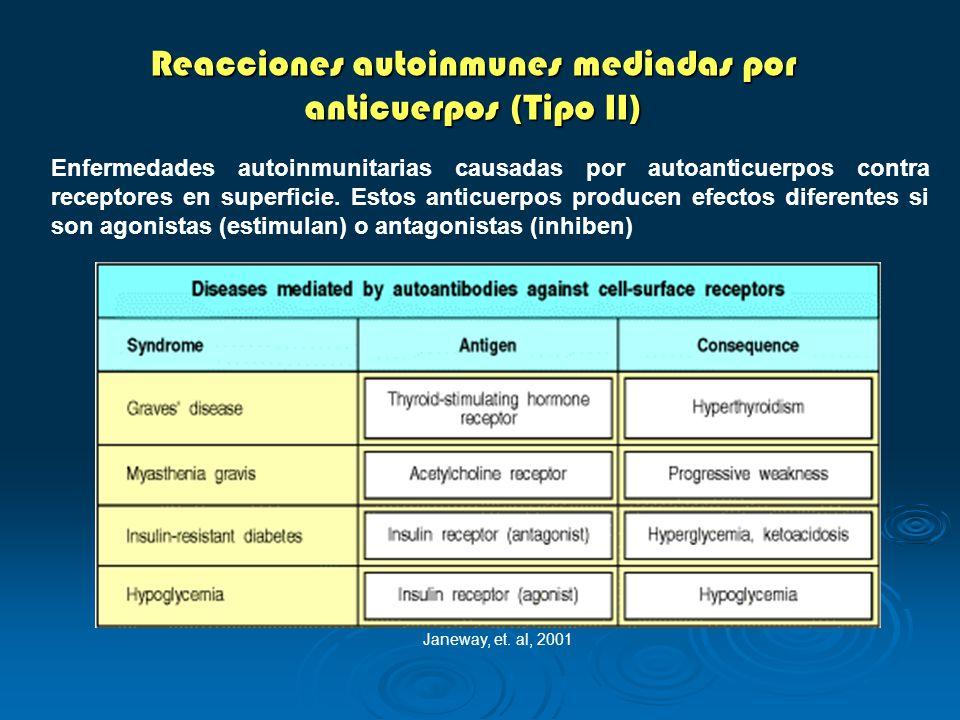 Reacciones autoinmunes mediadas por anticuerpos (Tipo II) Enfermedades autoinmunitarias causadas por autoanticuerpos contra receptores en superficie.