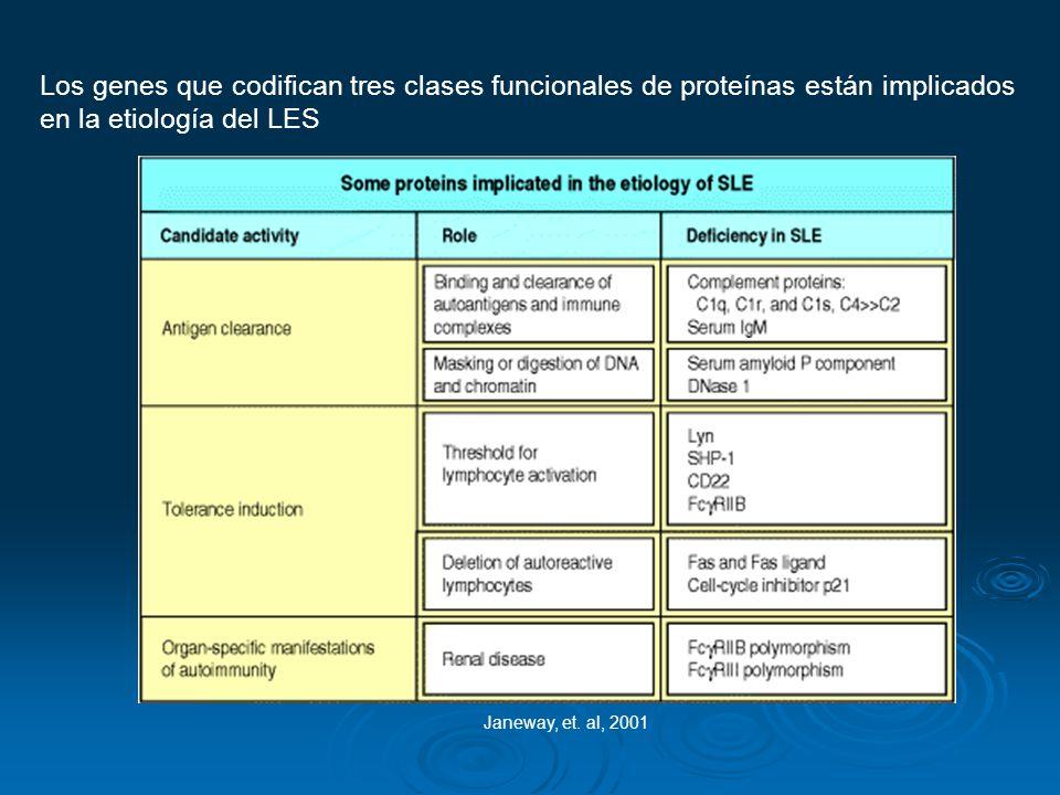 Los genes que codifican tres clases funcionales de proteínas están implicados en la etiología del LES Janeway, et. al, 2001
