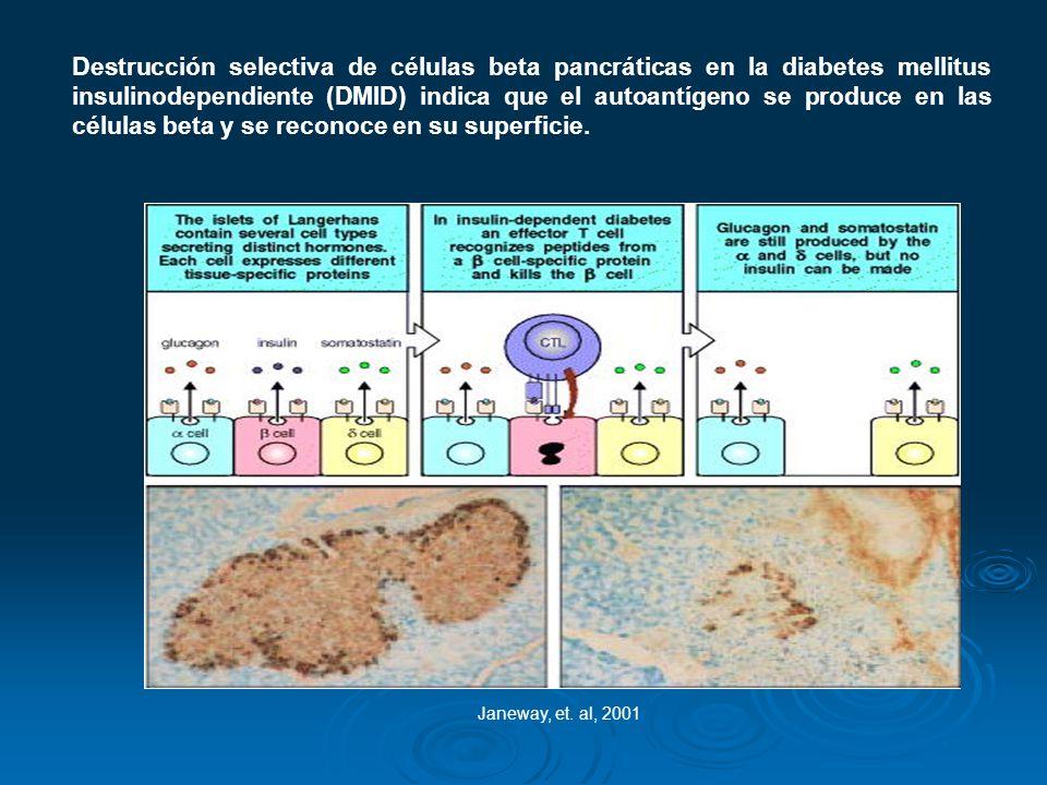 Janeway, et. al, 2001 Destrucción selectiva de células beta pancráticas en la diabetes mellitus insulinodependiente (DMID) indica que el autoantígeno