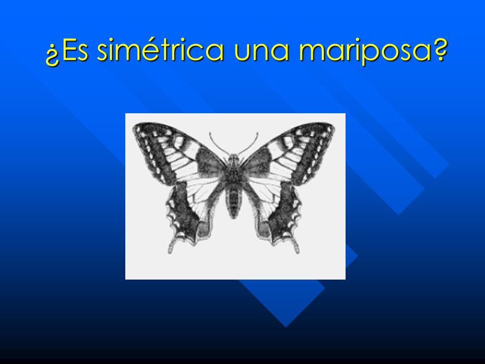 ¿Es simétrica una mariposa?