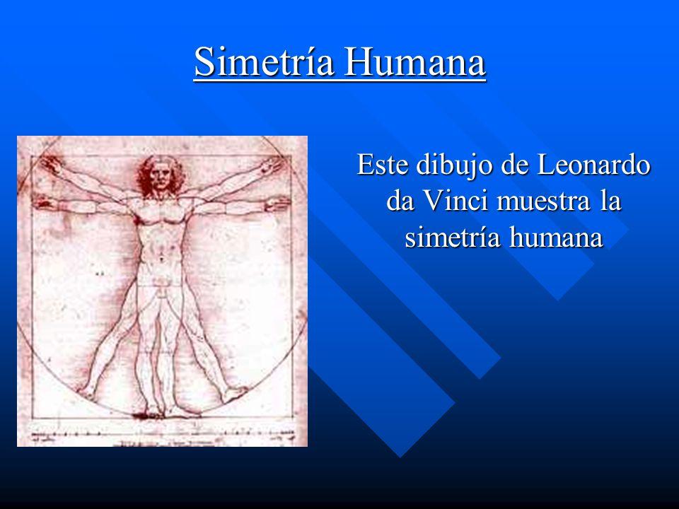 Simetría Humana Este dibujo de Leonardo da Vinci muestra la simetría humana