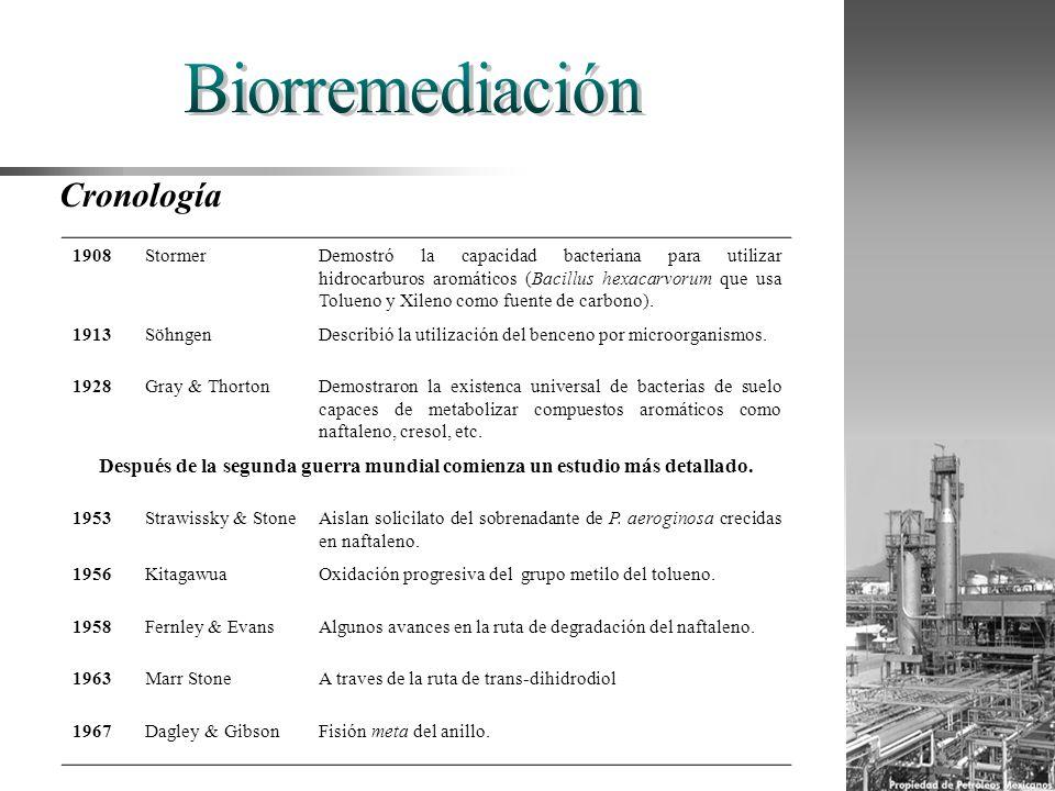 1908StormerDemostró la capacidad bacteriana para utilizar hidrocarburos aromáticos (Bacillus hexacarvorum que usa Tolueno y Xileno como fuente de carb