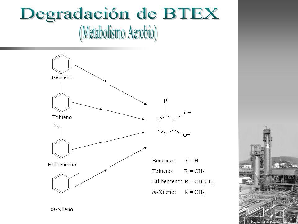 Benceno Tolueno Etilbenceno m-Xileno Benceno: R = H Tolueno: R = CH 3 Etilbenceno: R = CH 2 CH 3 m-Xileno: R = CH 3