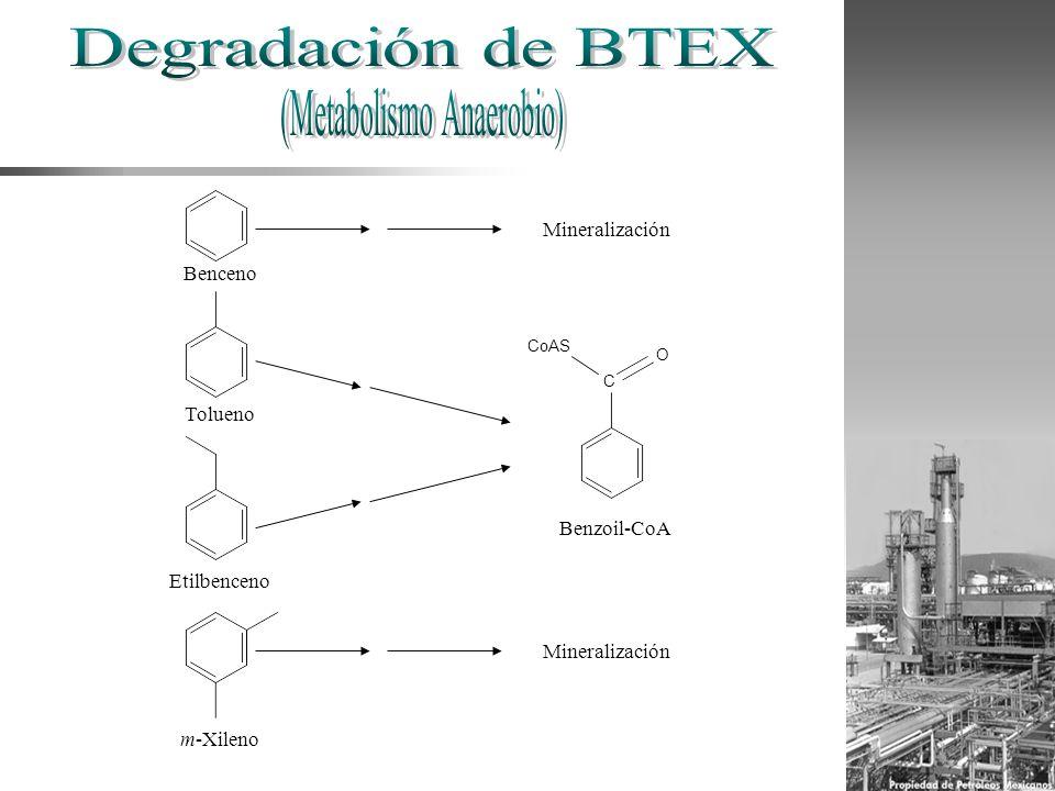 Benceno Tolueno Etilbenceno m-Xileno C CoAS O Benzoil-CoA Mineralización