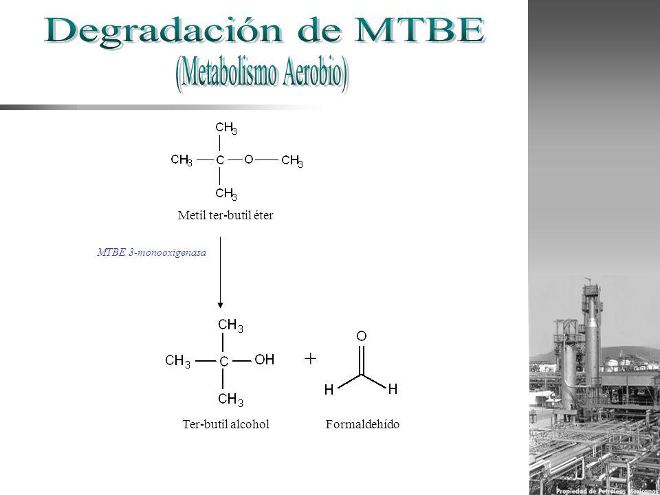 Metil ter-butil éter MTBE 3-monooxigenasa + FormaldehídoTer-butil alcohol