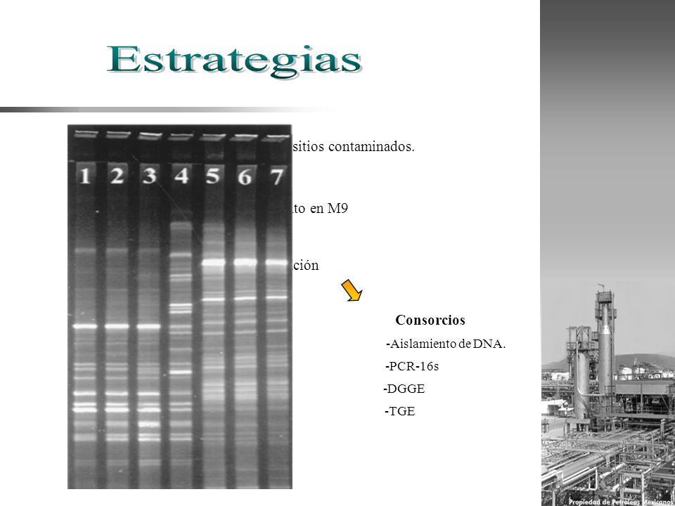 Aislamiennto de cepas en sitios contaminados. Enriquecimiento en M9 Cepas puras Consorcios Caracterización -Análisis microbiológicos -Análisis bioquím