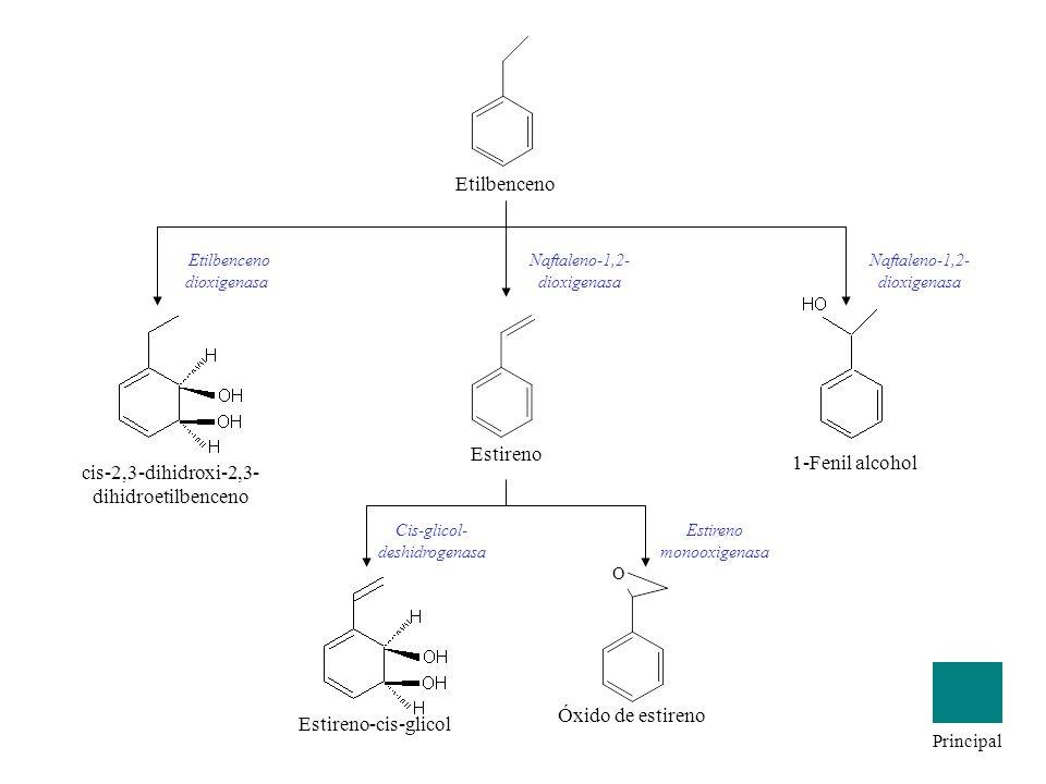 Etilbenceno Estireno Naftaleno-1,2- dioxigenasa 1-Fenil alcohol Naftaleno-1,2- dioxigenasa cis-2,3-dihidroxi-2,3- dihidroetilbenceno Etilbenceno dioxi