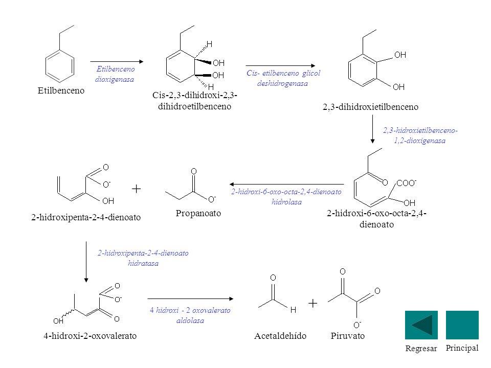 Etilbenceno Etilbenceno dioxigenasa Cis-2,3-dihidroxi-2,3- dihidroetilbenceno 2,3-dihidroxietilbenceno Cis- etilbenceno glicol deshidrogenasa 2-hidrox