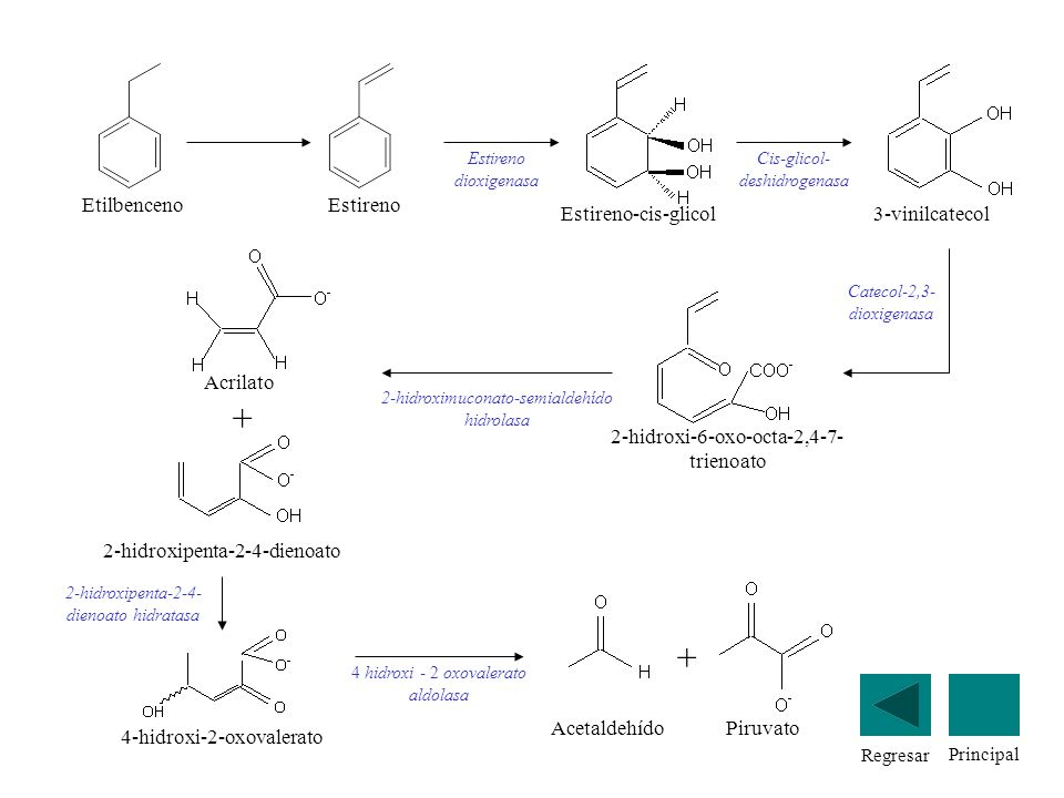 Regresar Principal Estireno Estireno dioxigenasa Estireno-cis-glicol Cis-glicol- deshidrogenasa 3-vinilcatecol 2-hidroxi-6-oxo-octa-2,4-7- trienoato C
