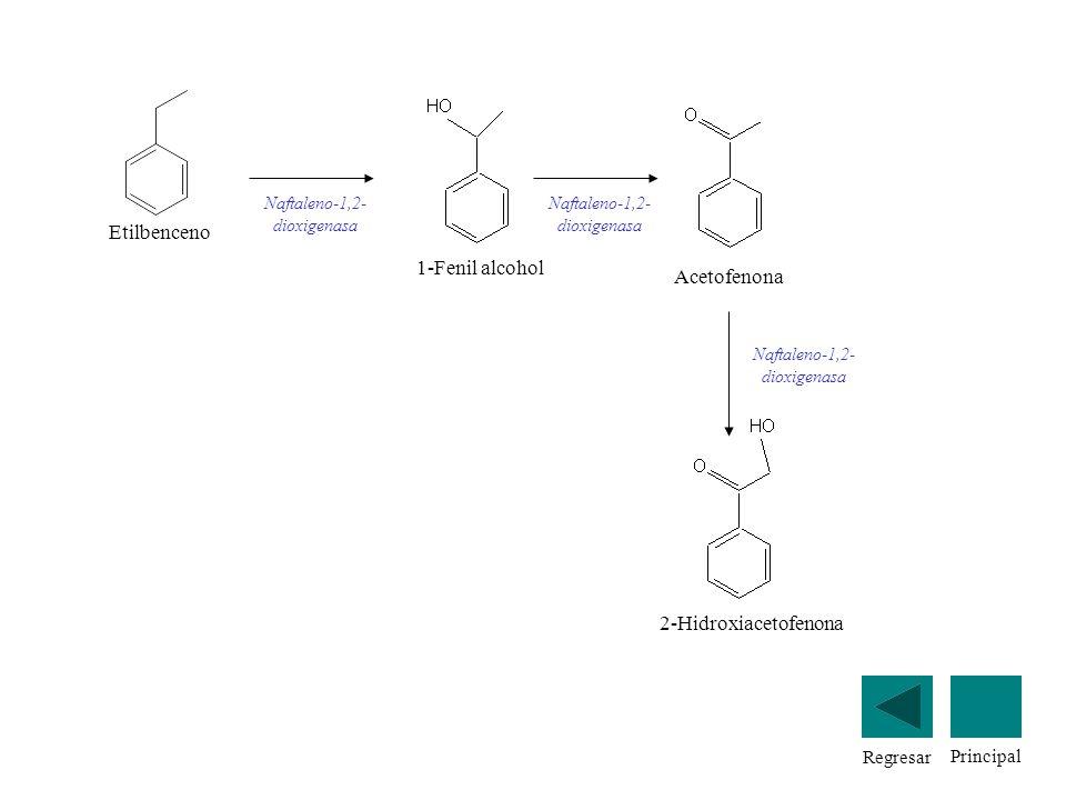 Regresar Principal Etilbenceno 1-Fenil alcohol Naftaleno-1,2- dioxigenasa Acetofenona Naftaleno-1,2- dioxigenasa 2-Hidroxiacetofenona