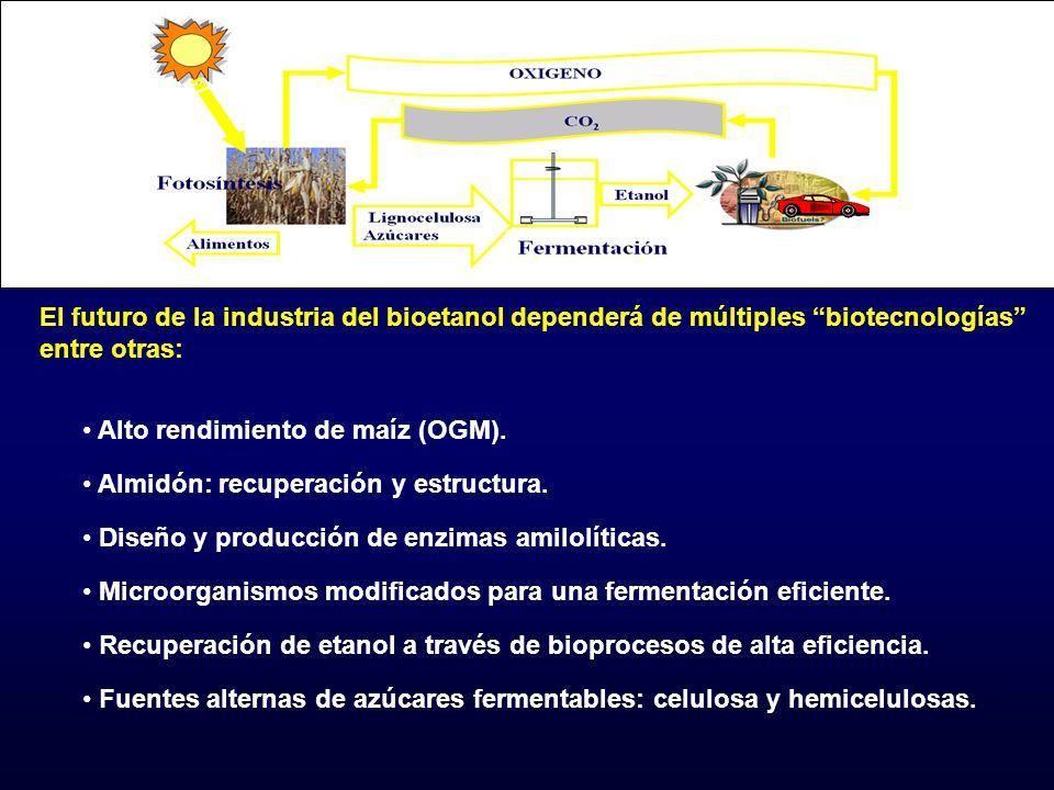 Alto rendimiento de maíz (OGM). Almidón: recuperación y estructura. Diseño y producción de enzimas amilolíticas. Microorganismos modificados para una