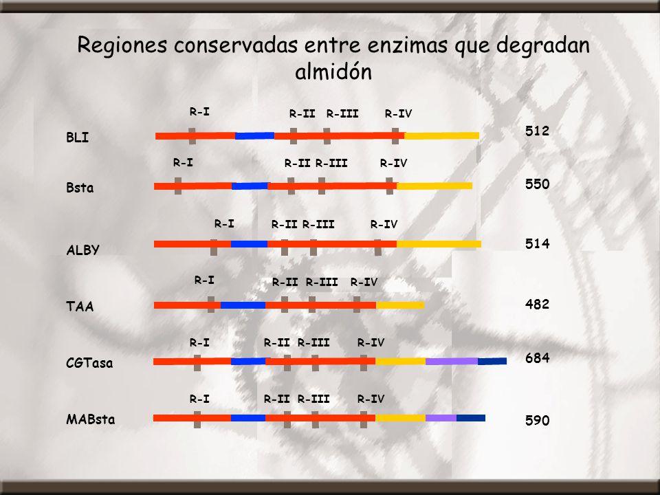 BLI 512 R-I R-IIR-IIIR-IV ALBY TAA Bsta CGTasa R-I R-IIR-IIIR-IV R-IR-IIR-IIIR-IV R-I R-IIR-IIIR-IV R-I R-IIR-IIIR-IV 514 482 550 684 R-IR-IIR-IIIR-IV MABsta 590 Regiones conservadas entre enzimas que degradan almidón