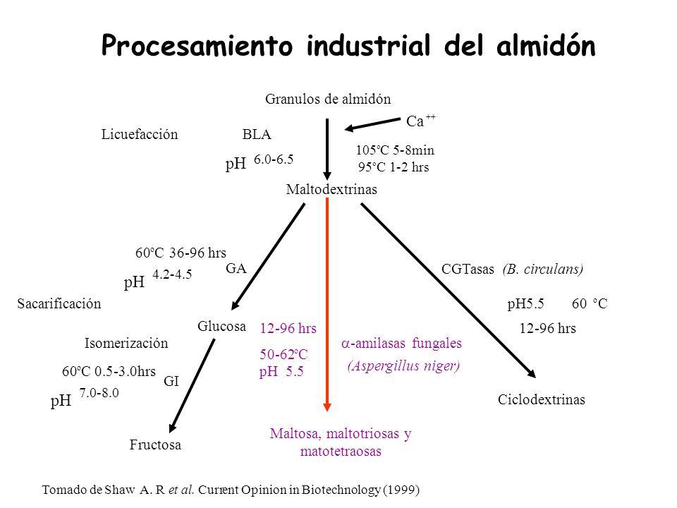 Procesamiento industrial del almidón Tomado de ShawA. Ret al. Current Opinion in Biotechnology (1999) GA 60 o C 0.5-3.0hrs 60 o C 36-96 hrs Glucosa Fr