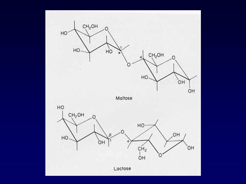 1 2 3 4 5 6 7 MAJORMINOR 1 2 3 4 5 MAJOR MINOR PANCREATICALPHA-AMYLASE TAKA-AMYLASE Hydrolysis of (A) maltopentaose byAspergillus or yzae -amylases (Nirta et al.