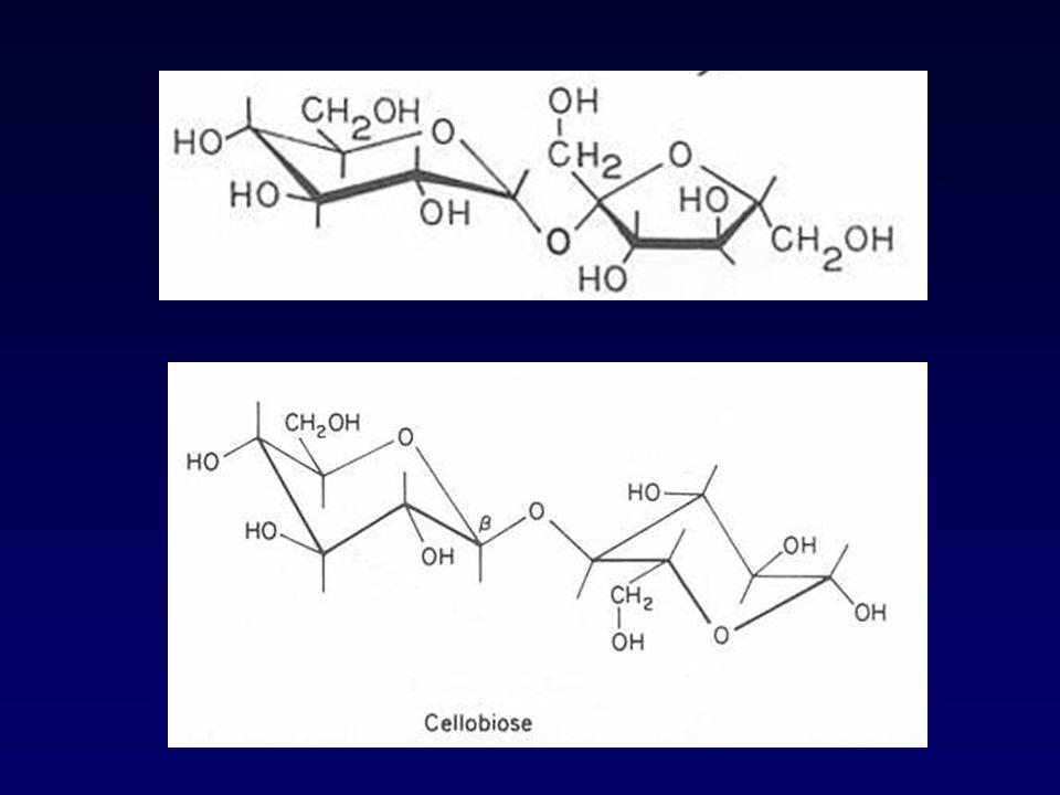 Endo amilasa -amilasa Exo amilasa -amilasa