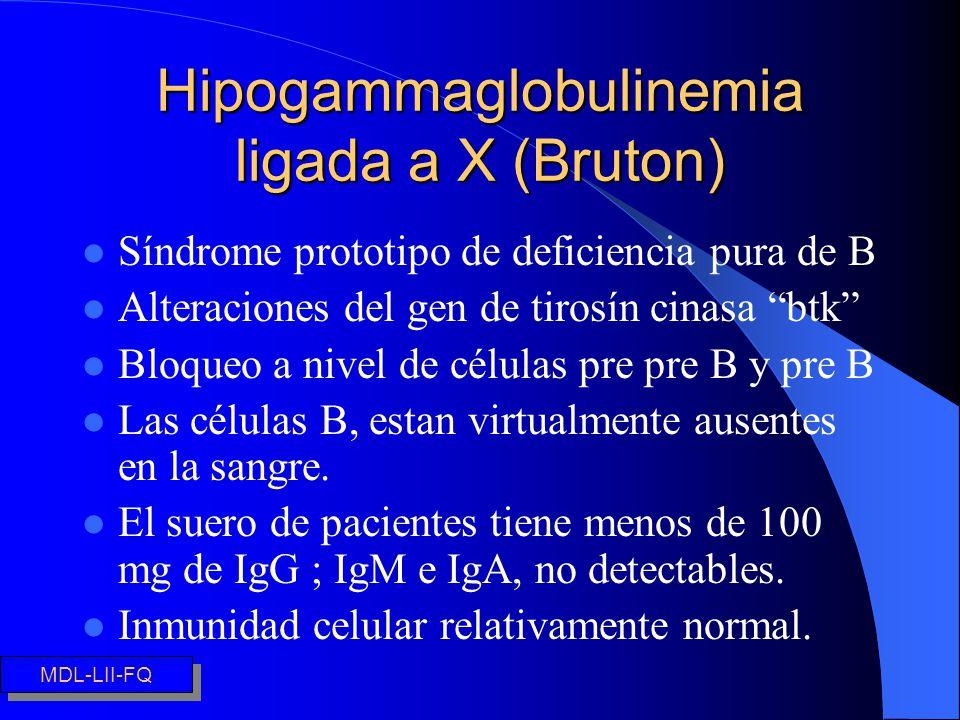 Hipogammaglobulinemia ligada a X (Bruton) l Síndrome prototipo de deficiencia pura de B l Alteraciones del gen de tirosín cinasa btk l Bloqueo a nivel