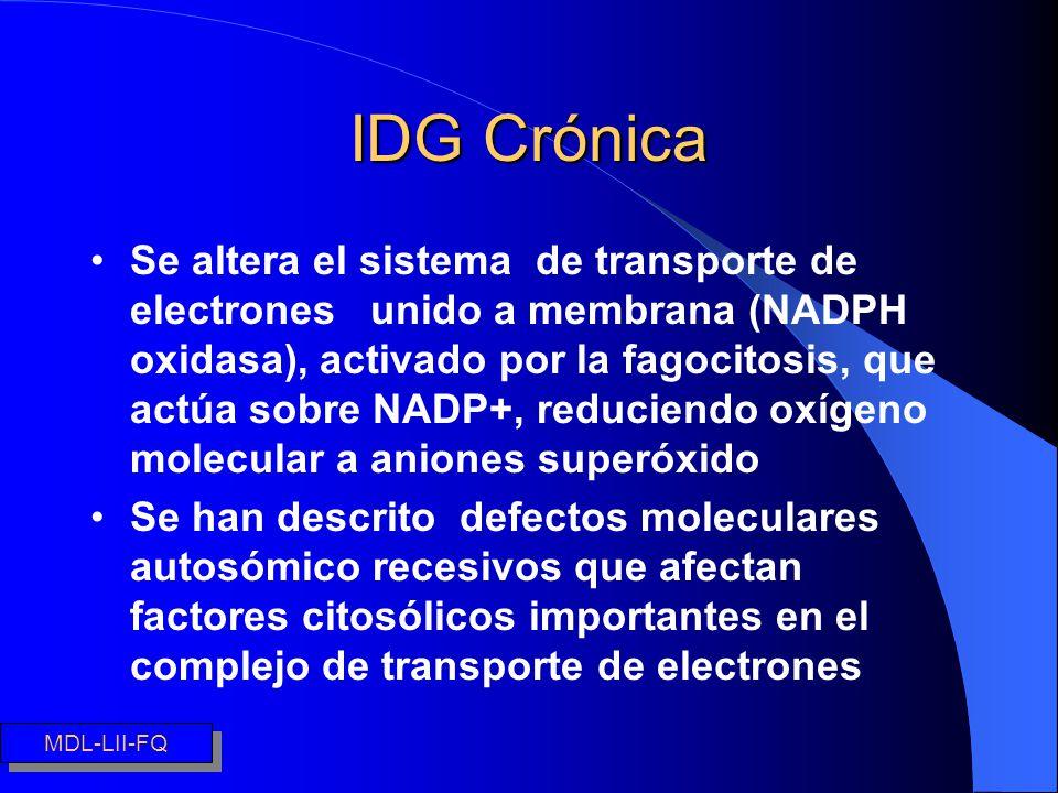 IDG Crónica Se altera el sistema de transporte de electrones unido a membrana (NADPH oxidasa), activado por la fagocitosis, que actúa sobre NADP+, red