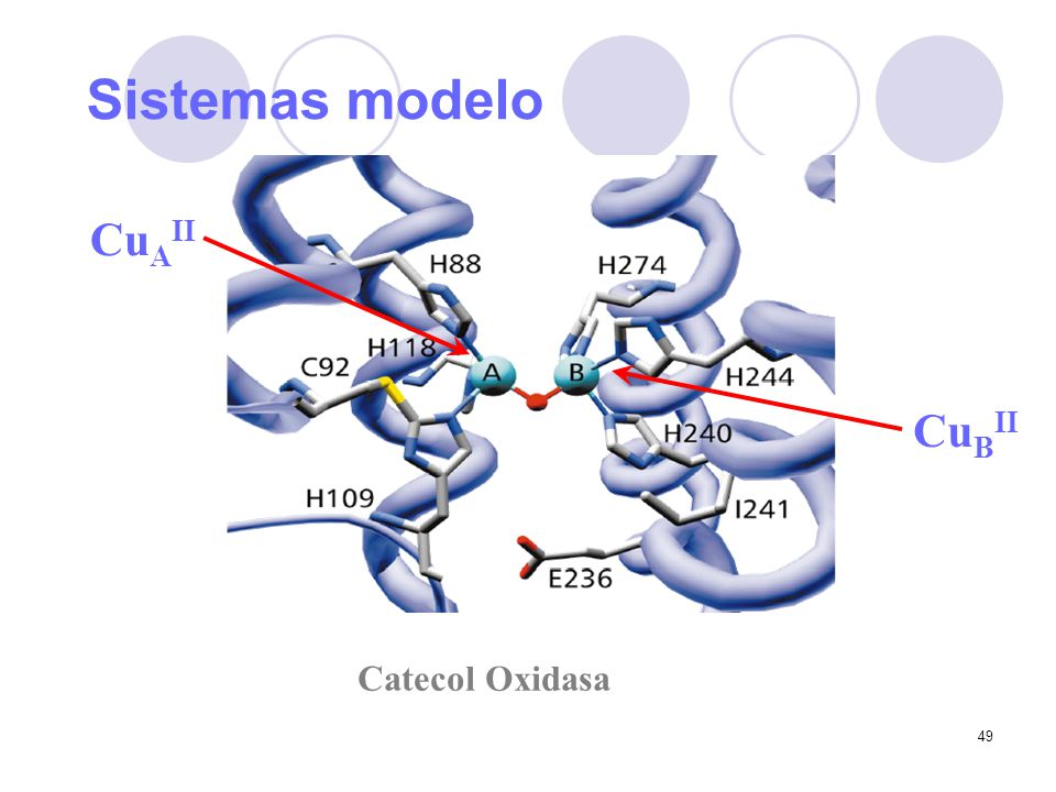 49 Sistemas modelo Catecol Oxidasa Cu B II Cu A II