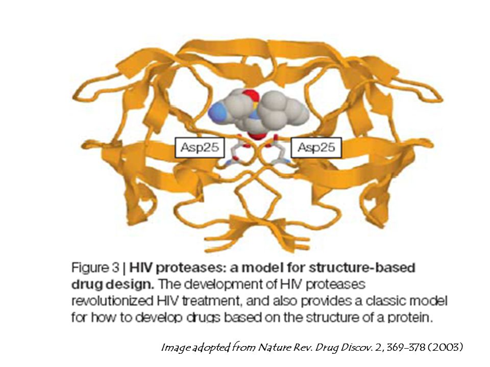 Image adopted from Nature Rev. Drug Discov. 2, 369-378 (2003)
