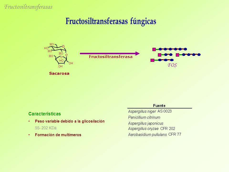 Fructosiltransferasas Sacarosa FOS Fructosiltransferasa O HO OH HO OH o HO o Características Peso variable debido a la glicosilación 55- 202 KDa Formación de multímeros