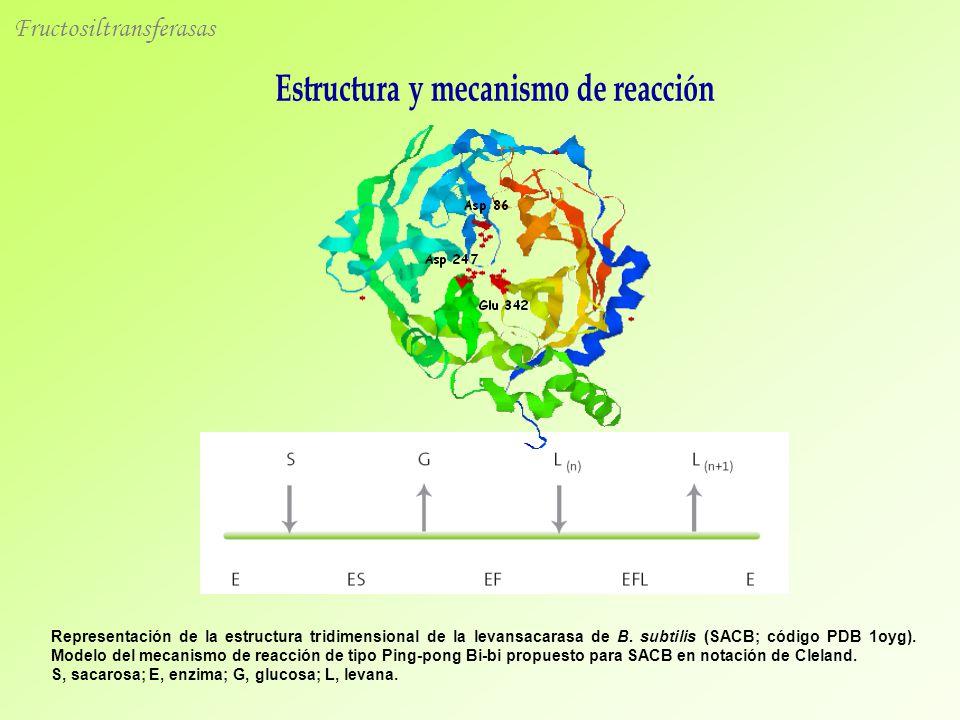 Representación de la estructura tridimensional de la levansacarasa de B. subtilis (SACB; código PDB 1oyg). Modelo del mecanismo de reacción de tipo Pi