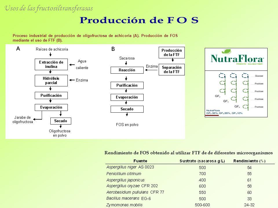 Usos de las fructosiltransferasas Proceso industrial de producción de oligofructosa de achicoria (A). Producción de FOS mediante el uso de FTF (B). Re