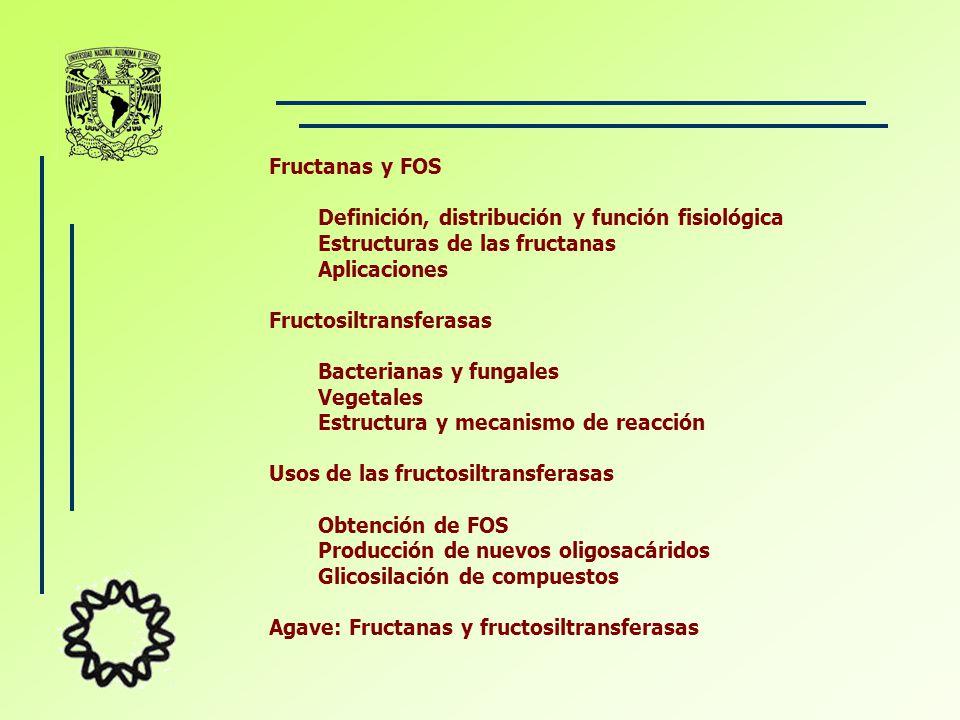 Fructanas y FOS Definición, distribución y función fisiológica Estructuras de las fructanas Aplicaciones Fructosiltransferasas Bacterianas y fungales Vegetales Estructura y mecanismo de reacción Usos de las fructosiltransferasas Obtención de FOS Producción de nuevos oligosacáridos Glicosilación de compuestos Agave: Fructanas y fructosiltransferasas