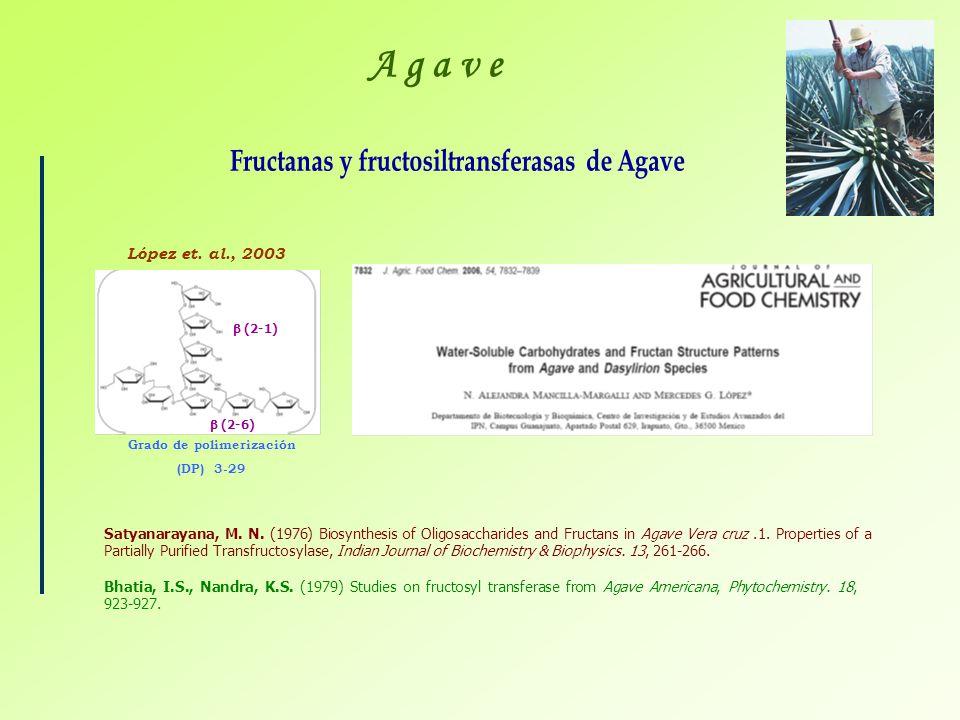 Grado de polimerización (DP) 3-29 López et. al., 2003 (2-1) (2-6) Satyanarayana, M. N. (1976) Biosynthesis of Oligosaccharides and Fructans in Agave V