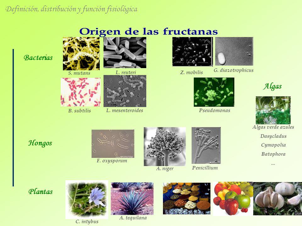 L. mesenteroides L. reuteri A. niger C. intybus A. tequilana Bacterias Hongos Plantas Definición, distribución y función fisiológica S. mutans B. subt