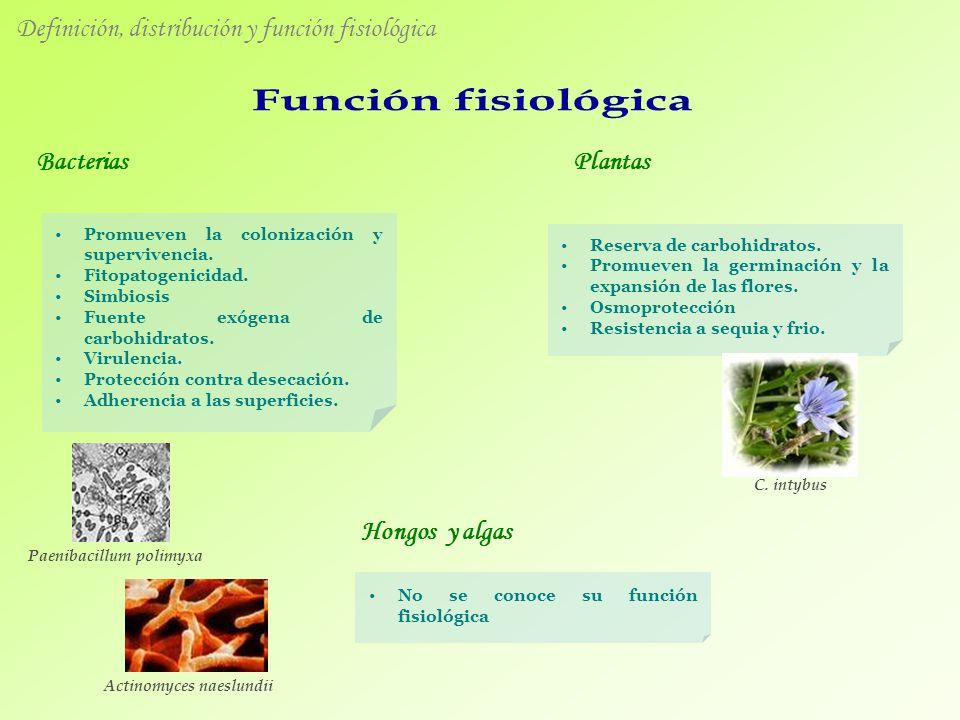 Bacterias Hongos y algas Plantas Definición, distribución y función fisiológica Promueven la colonización y supervivencia. Fitopatogenicidad. Simbiosi