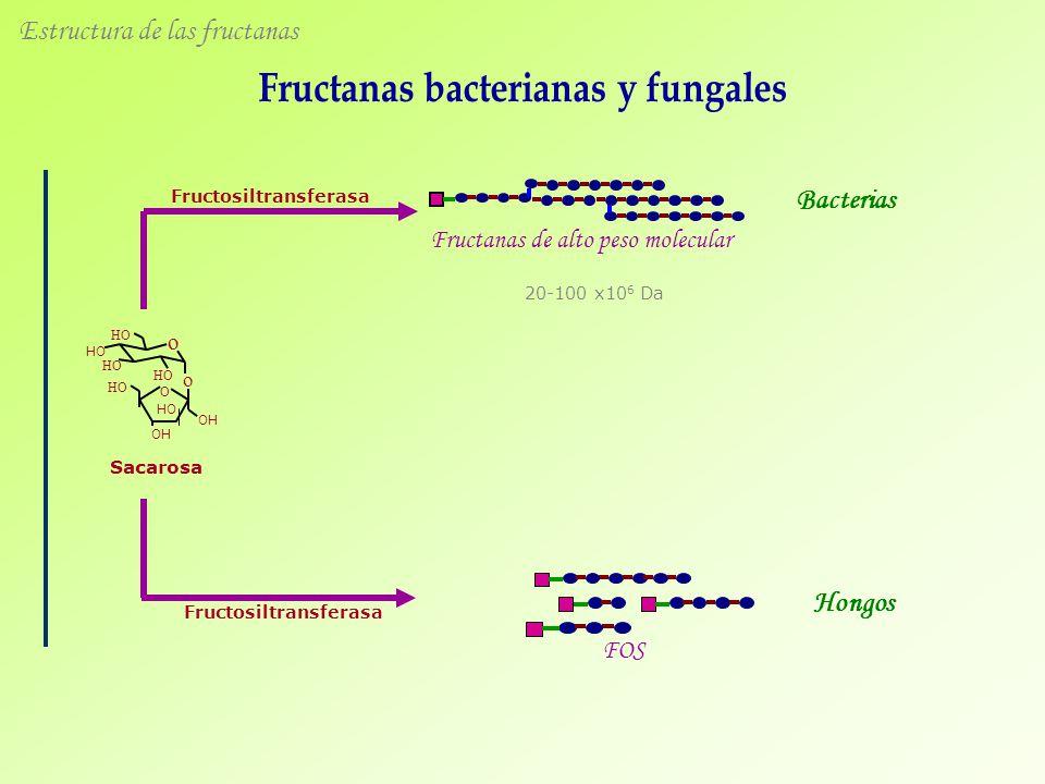 Estructura de las fructanas Sacarosa Fructosiltransferasa Fructanas de alto peso molecular FOS Fructosiltransferasa O HO OH HO OH o HO o Bacterias Hongos 20-100 x10 6 Da
