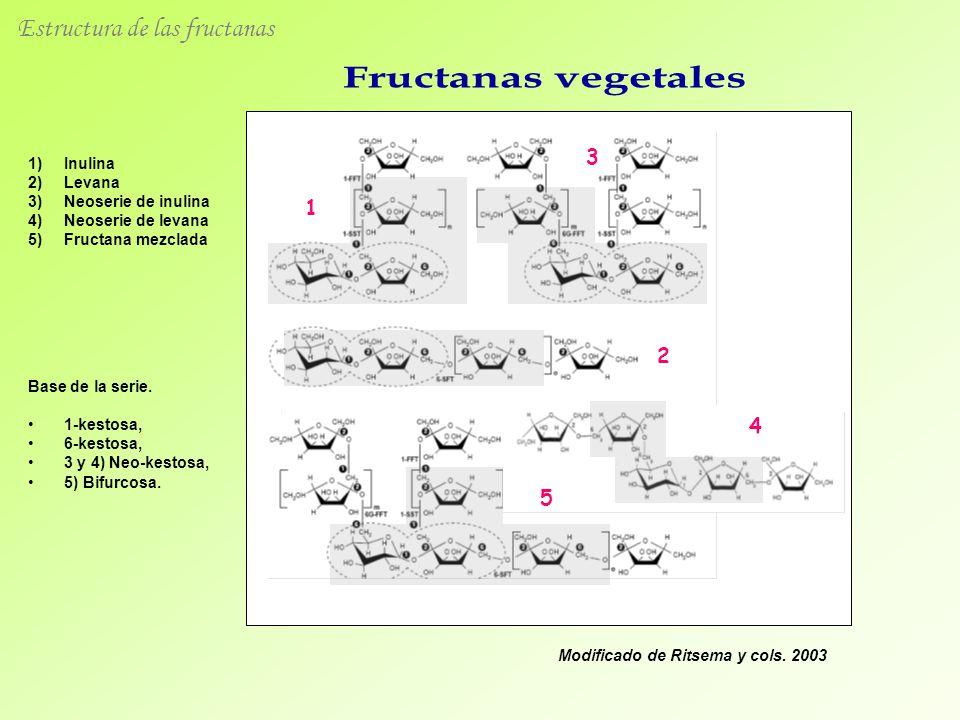 1 3 2 4 5 Modificado de Ritsema y cols. 2003 1)Inulina 2)Levana 3)Neoserie de inulina 4)Neoserie de levana 5)Fructana mezclada Base de la serie. 1-kes