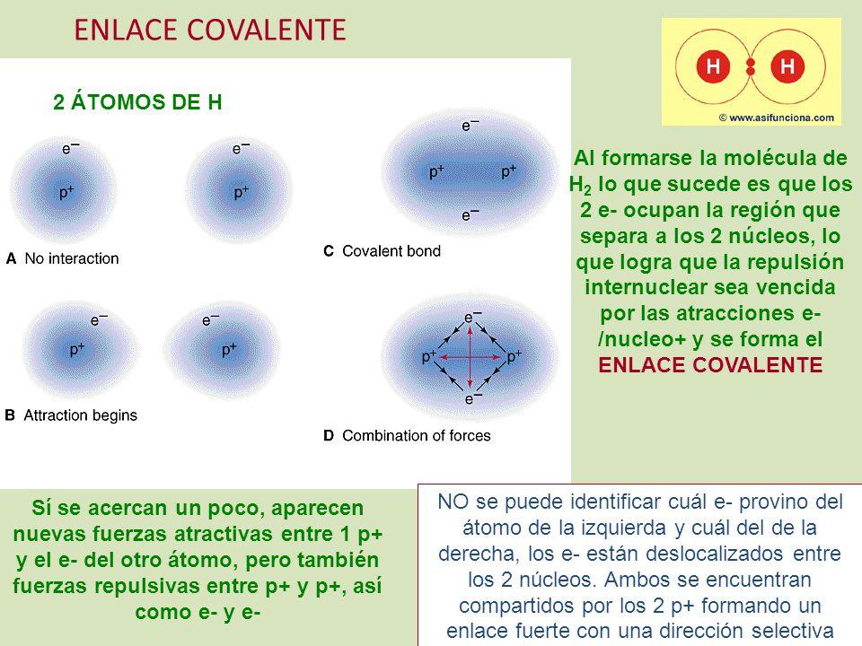 ENLACE COVALENTE 2 ÁTOMOS DE H Sí se acercan un poco, aparecen nuevas fuerzas atractivas entre 1 p+ y el e- del otro átomo, pero también fuerzas repul