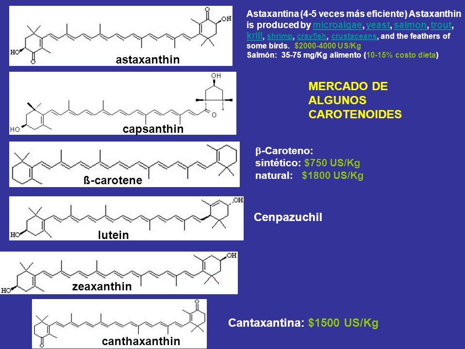 astaxanthin capsanthin ß-carotene lutein -Caroteno: sintético: $750 US/Kg natural:$1800 US/Kg Astaxantina (4-5 veces más eficiente) Astaxanthin is pro