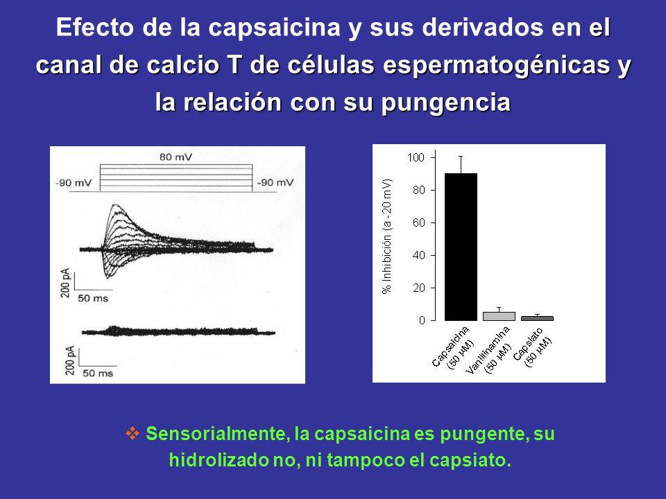 el canal de calcio T de células espermatogénicas y la relación con su pungencia Efecto de la capsaicina y sus derivados en el canal de calcio T de cél