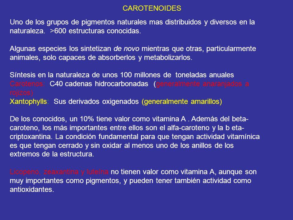 CAROTENOIDES Uno de los grupos de pigmentos naturales mas distribuidos y diversos en la naturaleza. >600 estructuras conocidas. Algunas especies los s