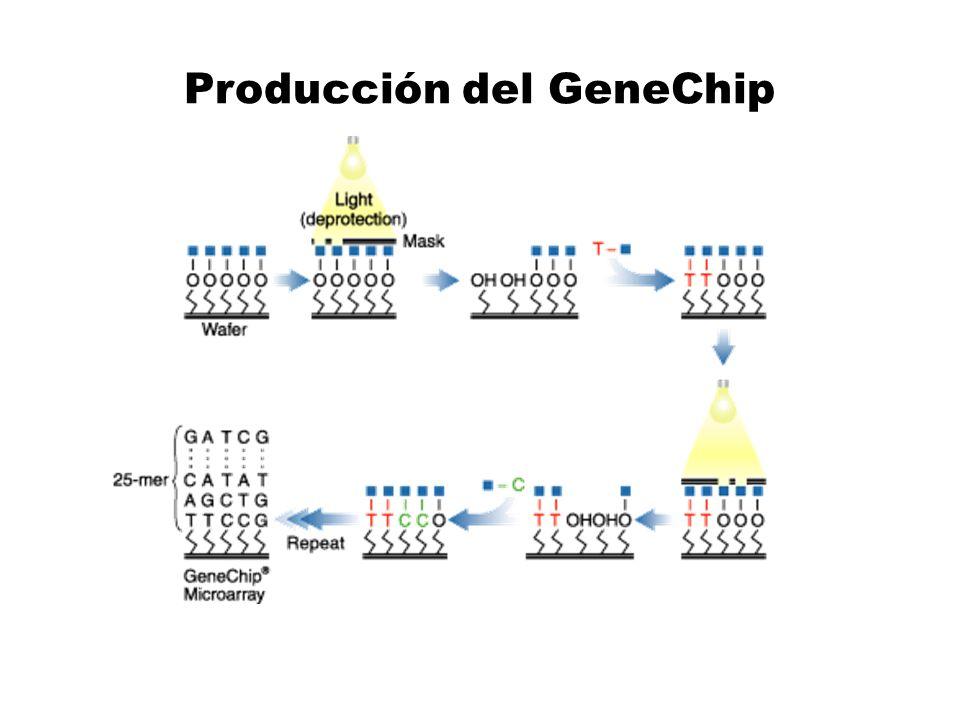 Producción del GeneChip