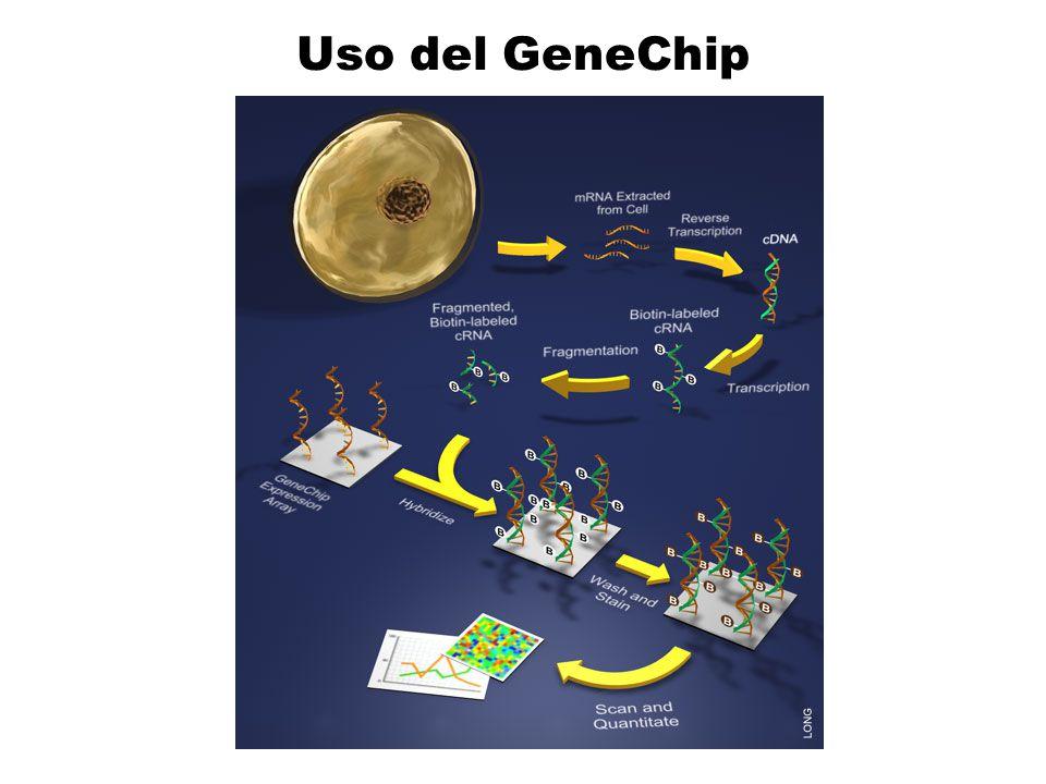 Uso del GeneChip