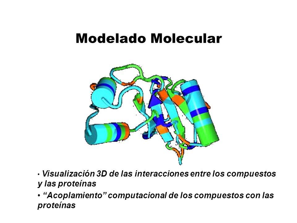 Modelado Molecular Visualización 3D de las interacciones entre los compuestos y las proteínas Acoplamiento computacional de los compuestos con las pro