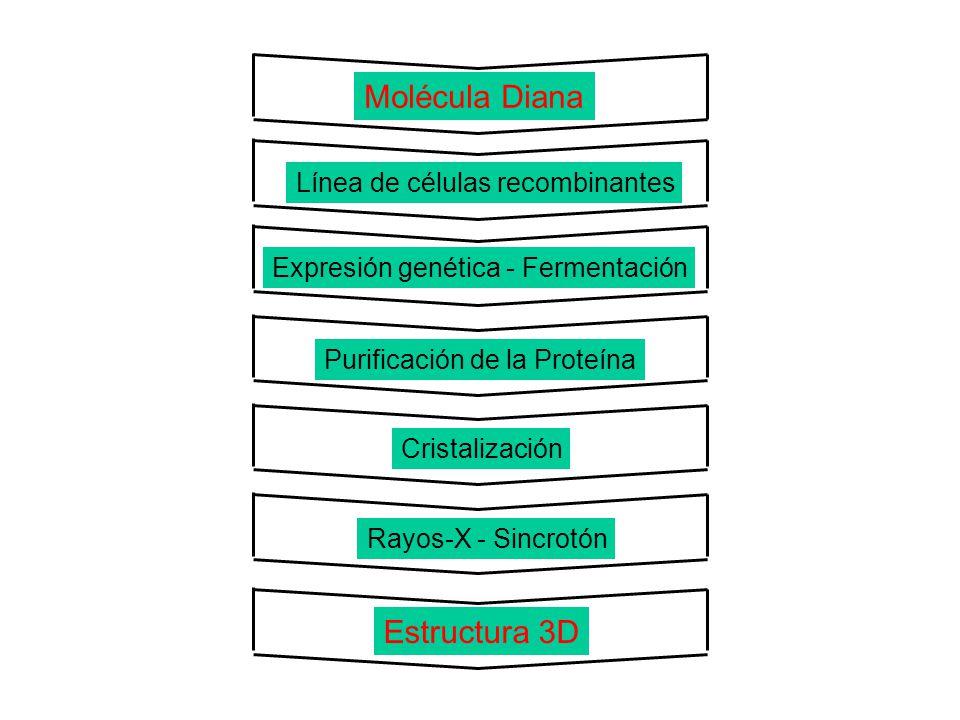 Molécula Diana Línea de células recombinantes Expresión genética - Fermentación Purificación de la Proteína Cristalización Rayos-X - Sincrotón Estruct