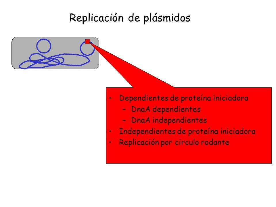 Dependientes de proteína iniciadora –DnaA dependientes –DnaA independientes Independientes de proteína iniciadora Replicación por circulo rodante Repl