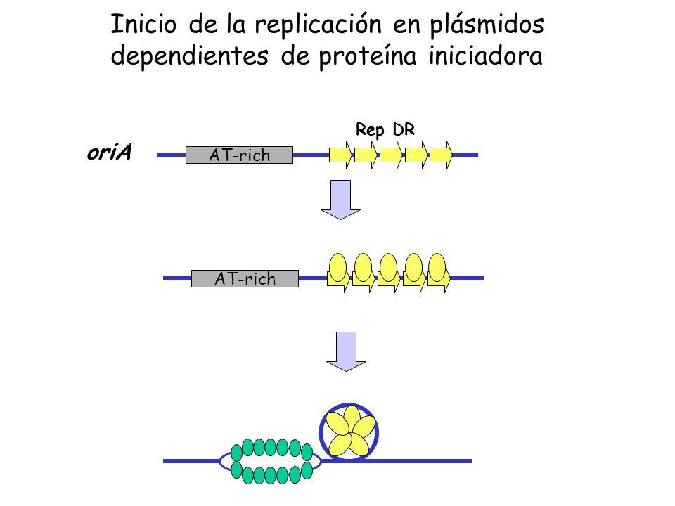 oriA AT-rich Rep DR AT-rich Inicio de la replicación en plásmidos dependientes de proteína iniciadora