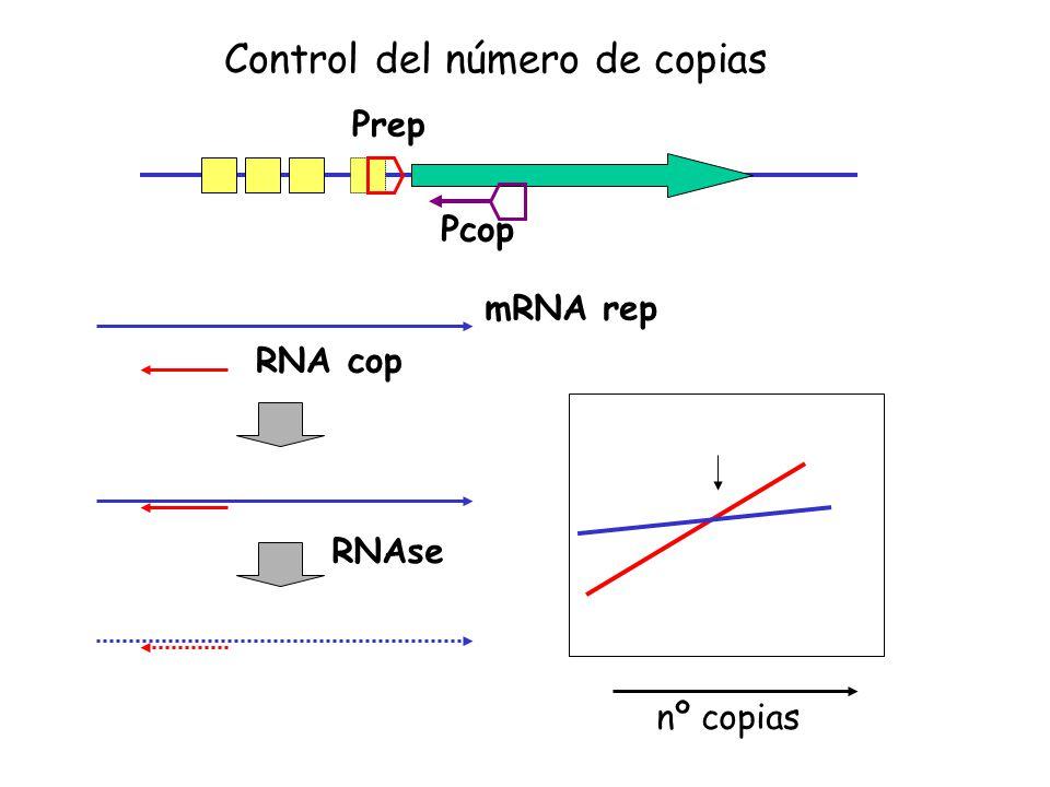 Prep Pcop mRNA rep RNA cop RNAse nº copias Control del número de copias