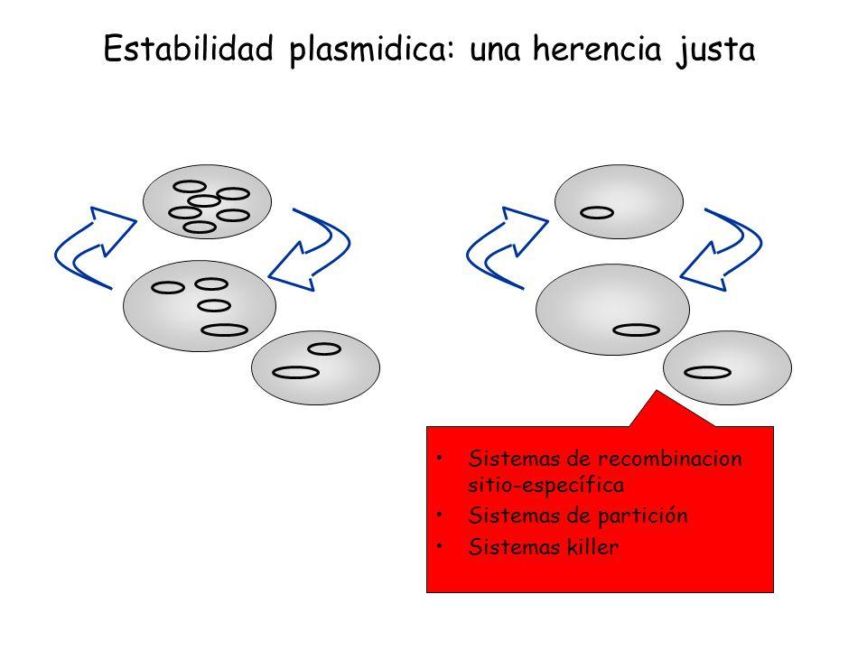 Sistemas de recombinacion sitio-específica Sistemas de partición Sistemas killer Estabilidad plasmidica: una herencia justa