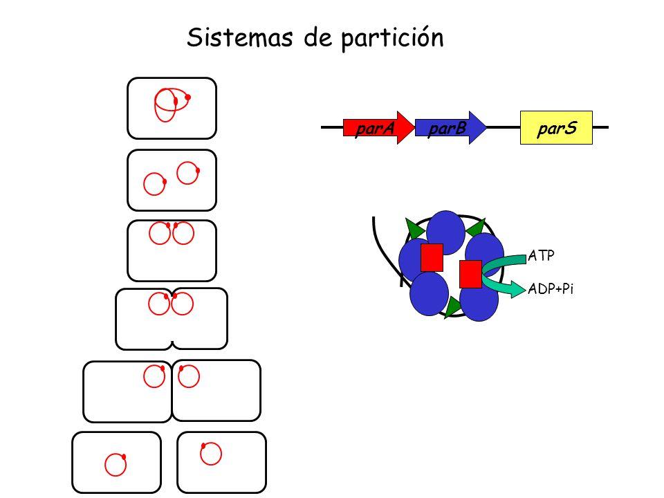 parAparBparS ATP ADP+Pi Sistemas de partición