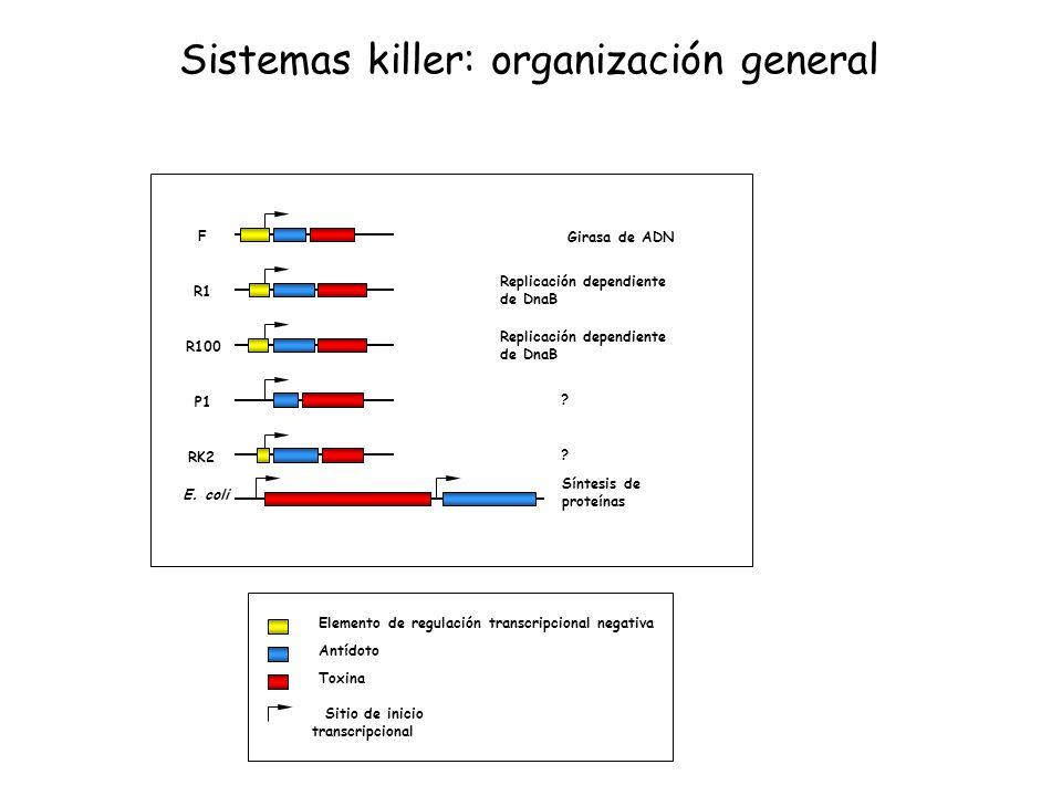 F R1 R100 P1 RK2 E. coli ? ? Síntesis de proteínas Replicación dependiente de DnaB Replicación dependiente de DnaB Girasa de ADN Elemento de regulació