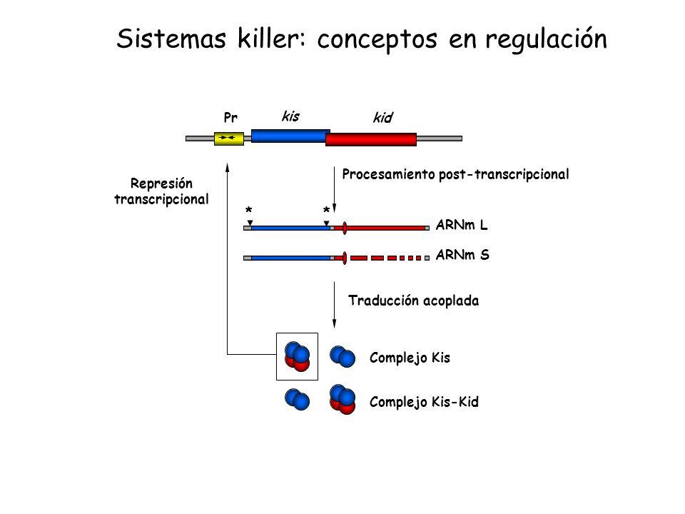 ** ARNm L ARNm S Complejo Kis Complejo Kis-Kid Procesamiento post-transcripcional Traducción acoplada Represión transcripcional Pr kis kid Sistemas ki