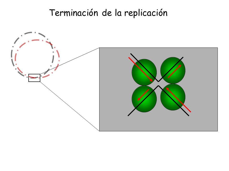 Prep Pcop nº copias Tasa de sintesis Control del número de copias